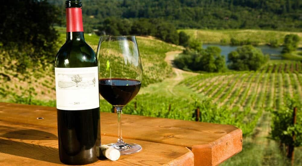 consejos buen bebedor vino
