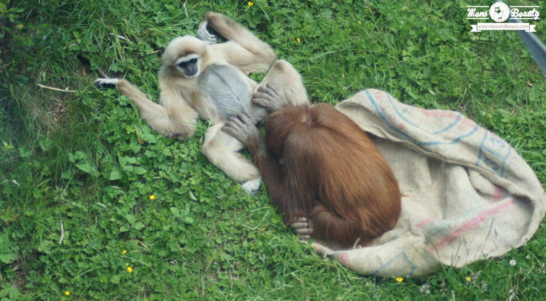 cosas no sabias sexo oral animales lo practican