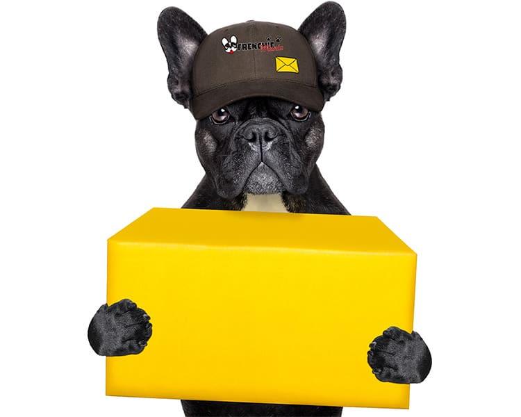 politicas enviosEnvíos  bulldog frances frenchie devoluciones  Devoluciones  bulldog frances frenchie concursos  Concursos
