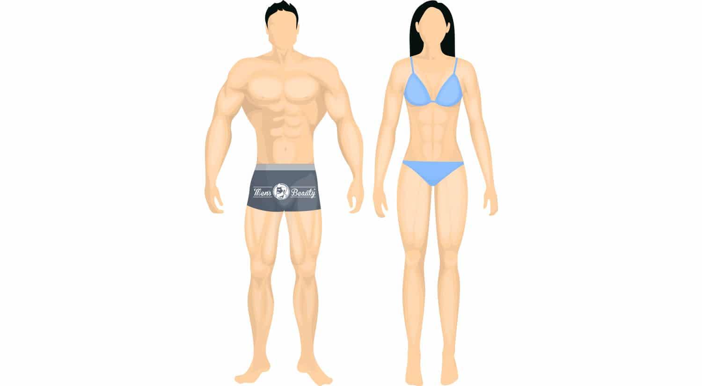 tipos de cuerpo segun biotipo tipo somatico cuerpo mesomorfo