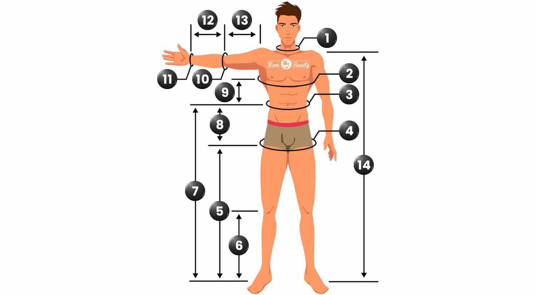 como tomar medidas cuerpo humano hombre proporciones corporales